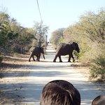 Elefantes na estradinha