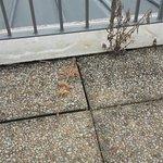 Jugez par vous même ces plantes qui ornent le balcon terrasse