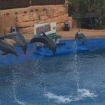 Dolphin show - Amazingggg