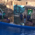 Seal show - loved them!