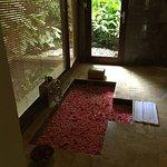โคมาเนกาแอทมังกี้ฟอเรสท์ ภาพ