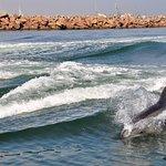 Delfines siguiendo las embarcaciones