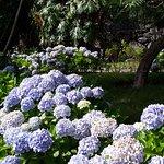 Hortensias en el jardín del hotel