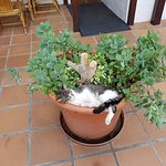 Uno de los gatos del hotel, descansando