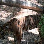 Cameron Park Zoo Foto