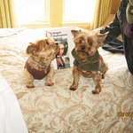 Nick and Nora are welcome on pet-friendly floor four of Ashland Springs Hotel