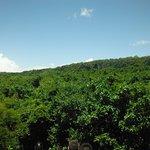 Tree Canopy for Zipline