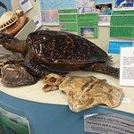 National Marine Life Center