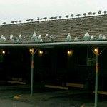 Shooting Star Motel Foto