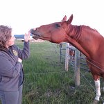 Grounding myself (from a very long trip) with the friendly horses not too far from the tents.