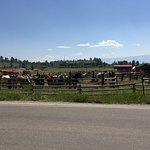 across the street, fragrant horseback riding place