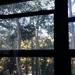 view from bedroom, trees with mountain beyond