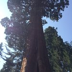 Photo of Visalia / Sequoia National Park KOA