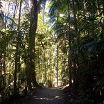 Tamborine Rainforest Skywalk Foto