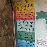 Cultura sull'evoluzione....