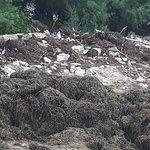 Daas Seegras wird ganz einfach am Strand gelagert!