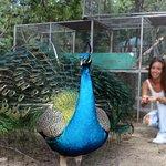 Photo of St. Maarten Zoo