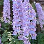 Breezeway Flowers
