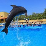 Dolphin Swim Experiemce