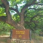 Monkeypod tree