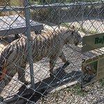 Foto de Tupelo Buffalo Park & Zoo