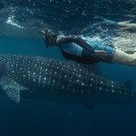 Kings Ningaloo Reef Tours Exmouth Photo