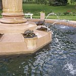 Turtle fountain - adorable!