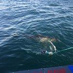 uma isca é lançada ao mar para atrair o tubarão