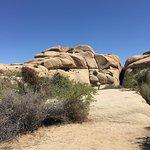 Foto de Jumbo Rocks Campground