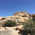 Photo of Jumbo Rocks Campground