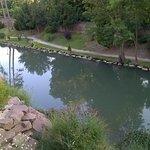 Vue sur l'étang depuis notre terrasse.