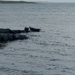 Photo of Seal View B&B