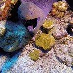 Photo of Elphinstone Reef