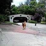 Photo of Villas Bellavista
