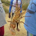 CaboLedo2015_fresh lobster