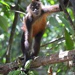 Mono de visita en Encanta la Vida !!