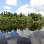 Amazing nature in the Everglades