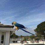 Il y a un magnifique perroquet à l 'hôtel