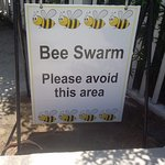 Right beside the pool. Why not get rid of the bees?