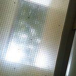 Dead insects in the skylight.