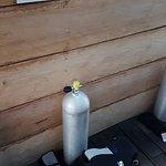 Photo de Scuba 6 ECO Diving