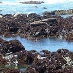 Foto di Sea Otter Inn