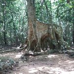 Cenote Santa Cruz Foto