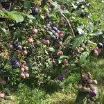 Wildwood Berry Farm