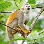 Squirel Monkey- Manuel Antonio