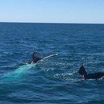 Foto di Absolute Ocean Charters
