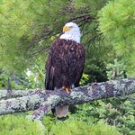Wonderful wildlife photo ops with eagles, loons, otters and more!