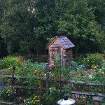 Karen's Box Gardens