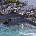 Foto de Dolphin Discovery Isla Mujeres
