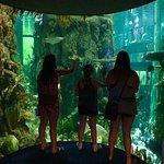 Visiting the Moody Gardens Aquarium Pyramid